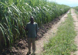 Mutharika lied on Malawi land grabs