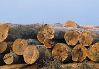 Logging and deforestation: Malawi's diminishing plantations
