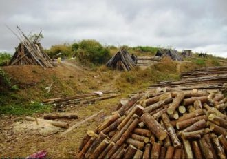 "MK1.7 billion ""deforested"" at the Viphya Plantation as project struggles to survive"