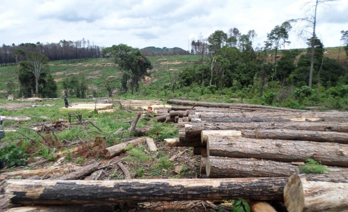 Government 'bows out' of Raiply concession, retains plantation land