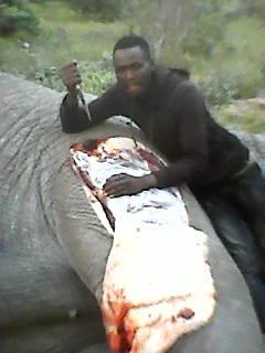 Botswana rhino poaching worsens as government dithers